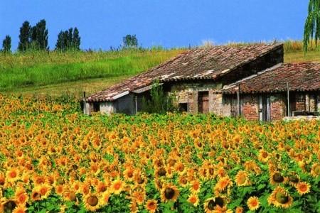 FRANCIE - Provence za vůní levandule do Provence - Krajem pa Bez stravy