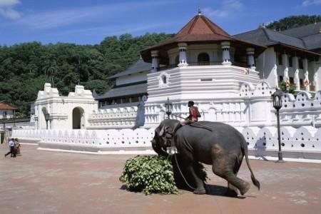 ROYAL PALMS BEACH HOTEL, Srí Lanka, Kalutara