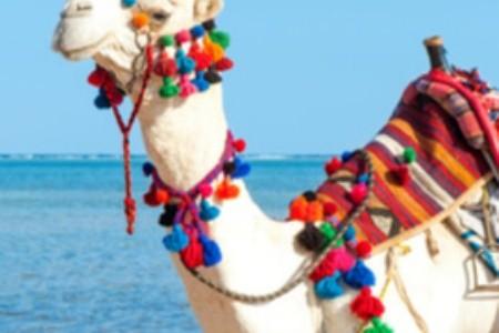 Na Djerbě se rozhodně nudit nebudete