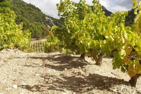 Beaujolais a Burgundsko - poznávací zájezdy