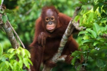 Na Borneo nejen za orangutany