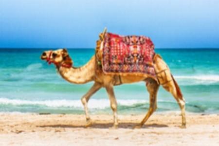Nekrásnější tuniské pláže