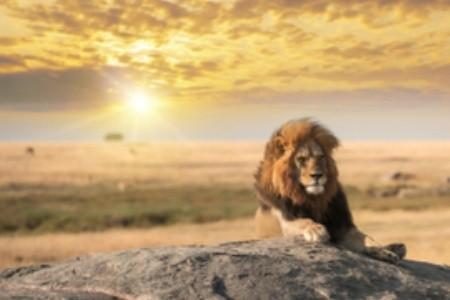 Po stopách Lvího krále: Která místa inspirovala oblíbený film?