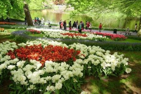 Květinové korzo - Keukenhof a Amsterdam Bez stravy