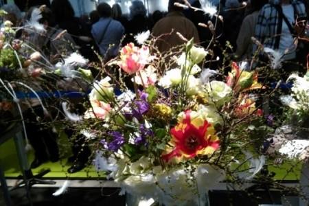 Drážďany - výstava orchidejí a jarní nákupy - levně