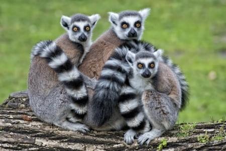 MADAGASKAR – PŘÍRODNÍ RÁJ PLANETY