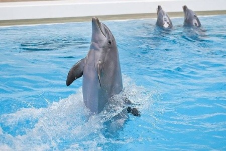 Delfíní Laguna A Zoo Norimberk - levně