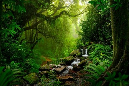 To Nejlepší Z Brazílie + Amazonský Prales + Koupán Snídaně