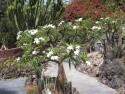 kaktusovy koutek