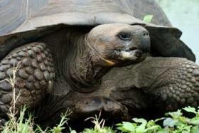 Z Peru na Galapágy