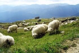 Za perlami Transylvánie, území knížete Drákuly