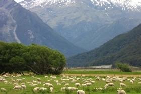 Nový Zéland komfortně