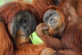 Zážitková Indonésie - Tropická Sumatra a pohoda na ostrově Banyak