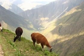 Inca Trail - Trek na Machu Picchu