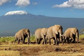 Rwanda - Uganda - Kongo - Tanzanie - Hory Afriky s Radkem Jarošem