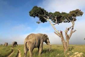JAR – Zimbabwe – Botswana