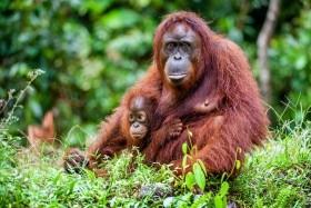 Borneo - Brunej - Tropická příroda s odpočinkem u moře