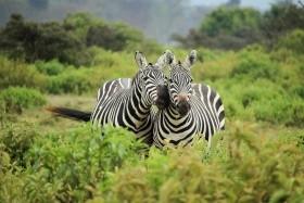 Napříč Afrikou - Safari v Keni, Viktoriiny vodopády, Kapské Město