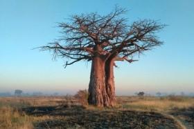 Madagaskar, země lemurů a baobabů