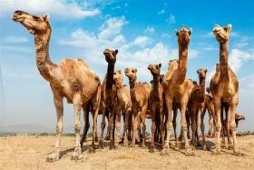 Rádžastán-Putování Do Země Králů
