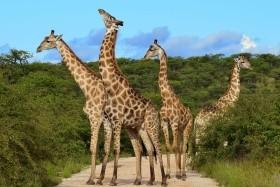 Tanzanie safari - Zanzibar - Bez výstupu na Mt. Keňu
