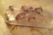 Mravenci na pokojích