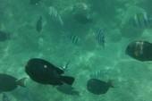 Koral pri móle