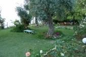Zahrada s růžemi a olivovníky