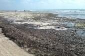 pláž hotelu při odlivu