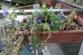 květinovvá výzdoba u bazénu