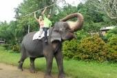 Jízdu na slonovi doporučuji