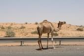 Cesta do Fujairahy