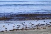 Kvalita &quot,průzračného&quot, moře