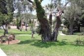 Zahrada hotelu Delfinia