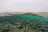 koral zátoka