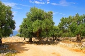 Olivové zahrady Lun