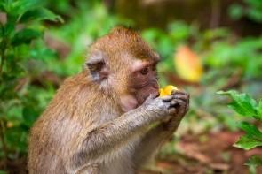 Vrch Toe Sae (Opičí vrch)