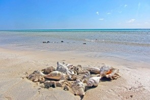 Pláž Sharm el Luli