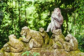 Posvátný Opičí les