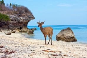 Ostrov Pulau Menjangan (Jelení ostrov)