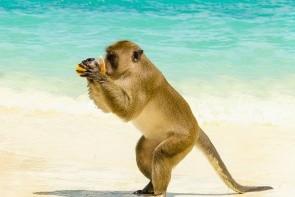 Opičí pláž