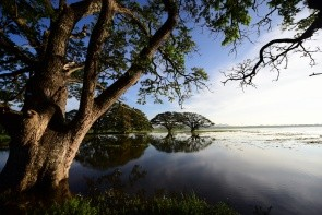 Jezero Tissa Wewa