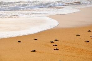 Asociace na ochranu želv & želví líheň