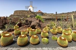 Kaktusová zahrada