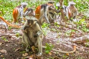 Přírodní rezervace Kiwengwa-Pongwe