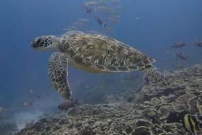 Záchranná stanice pro želvy Mnarani