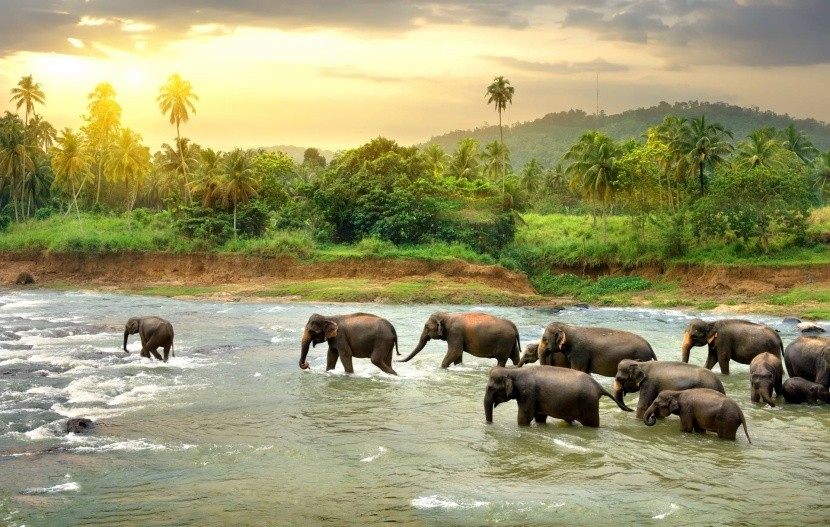 Divocí sloni