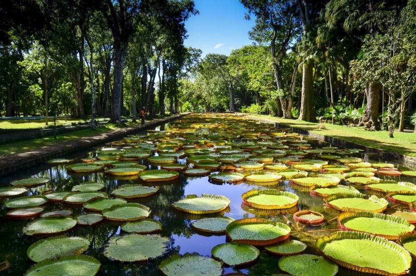 Botanická zahrada Pamplemousses