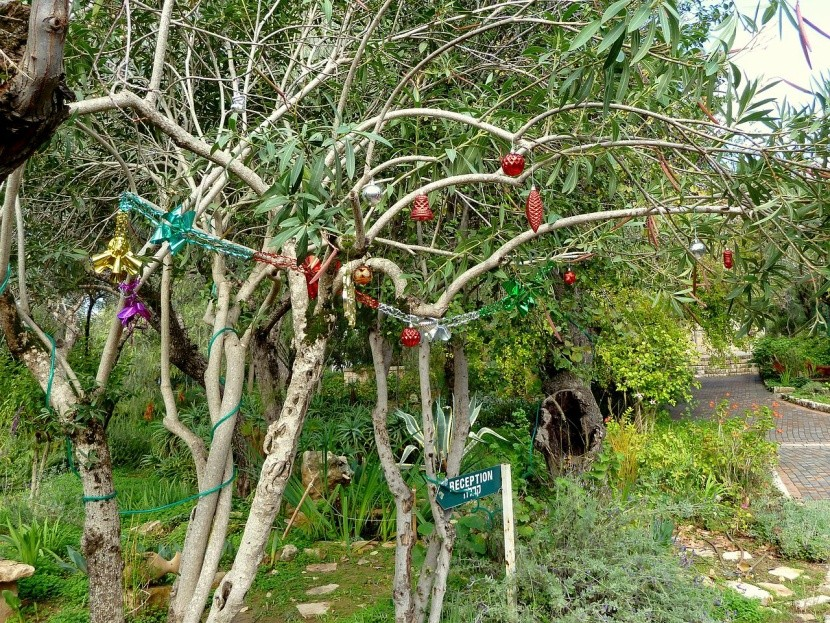V Indii si na Vánoce ozdobí jakýkoliv strom