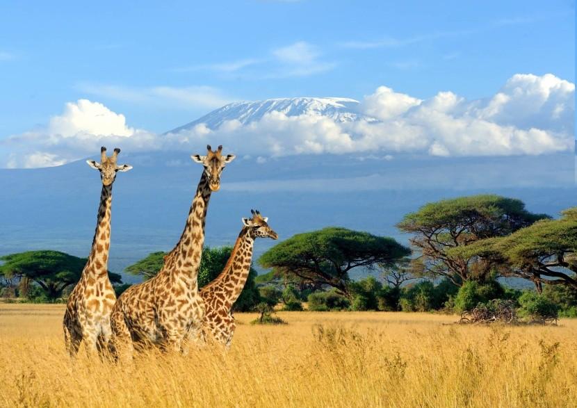 Národní park Amboseli v Keni